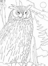 imprime le dessin à colorier de hibou