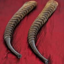 shofar mouthpiece waterbok shofars