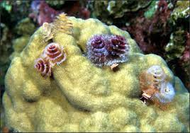crinoids feather stars sea lilies sponges sea squirts and
