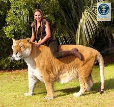 liger hercules in guinness book of world records