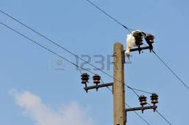 dead bird on high voltage electricity wires killed young stork