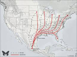 Mexico Climate Map by Illegal Logging U201cstopped U201d But Climate Change Aerial Insecticides
