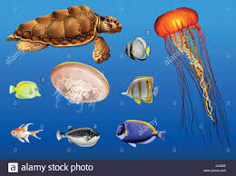 different types of sea animals in ocean illustration stock vector