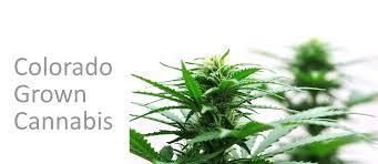 herb shoppe medical marijuana dispensary colorado springs 80904