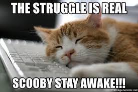 The Struggle Is Real Meme - the struggle is real scooby stay awake sleepy cat meme