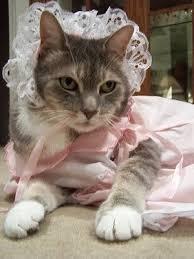 Kitten Halloween Costumes Pet 5905 Cats Costumes Images Animals Kitty