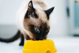 what to do when your cat goes off their food pets4homes