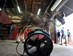carriage companies agree to outside study on horse treatment
