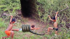 wow smart children catch a lot of snakes using bamboo trap in the