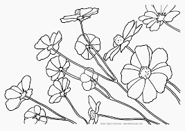 realistic flower coloring pages 25 best ideas about flower