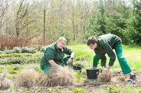 g rtner garten und landschaftsbau gärtner in fachrichtung garten und landschaftsbau cjd