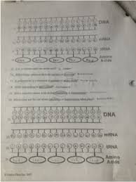 enzymes dna and protein synthesis matt boward u0027s aice biology