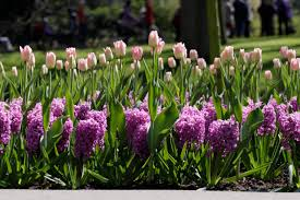 tips for planting and designing with bulbs hgtv
