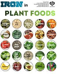 iron sources in vegan and vegetarian diet u2013 infographics vegan