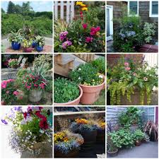 delighful container garden plans shadeloving plan throughout