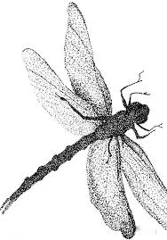 dragonfly tattoo designs tattooimages biz