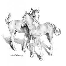horse pencil sketch pencil art drawing