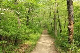 Indiana forest images File gfp indiana dunes national lakeshore forest trail path jpg jpg