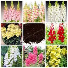 Cheap Flower Seeds - online get cheap flower seeds antirrhinum majus aliexpress com