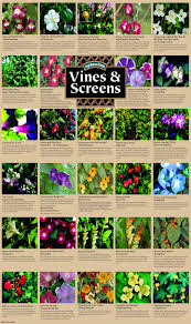 climbing plants and vines for growing on screens and trellis