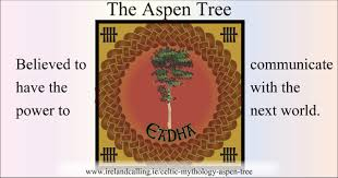 the aspen tree in celtic mythology calling