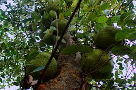 free images tree nature branch plant fruit sweet leaf