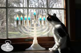 cat menorah celebrating hanukkah with dogs and cats with dogs and cats