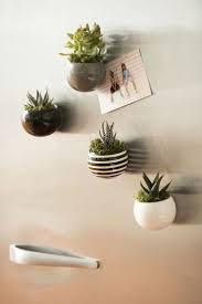 114 best air plant ideas images on pinterest air plants indoor