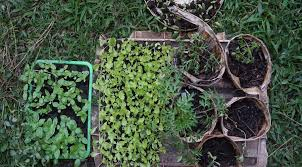 starting a vegetable garden a guide to growing your own food