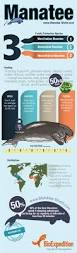 44 best infographics images on pinterest infographics animal