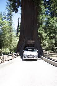 Chandelier Drive Through Tree 2015 Orikasa Summer Adventure