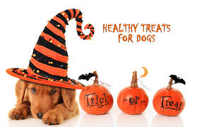 healthy treats to give your pets on halloween allivet pet care blog