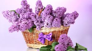 flower basket purple flower basket wallpaper 45539