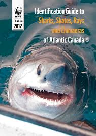 protecting canadian shark populations wwf canada