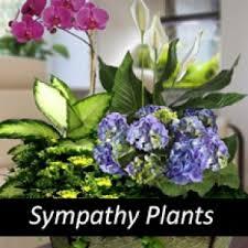 funeral plants sympathy plants funeral plants funeral plant sympathy plant