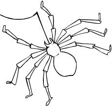 spider coloring pages coloring pages online
