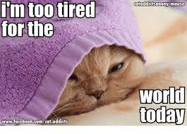 Too Tired Meme - im too tired forthe wwwfacebookcomcat addicts cataddicts anonymouse
