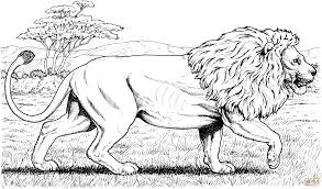 walking african lion coloring page free printable coloring pages