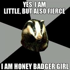 Honey Badger Meme - honey badger girls girls badger twitter