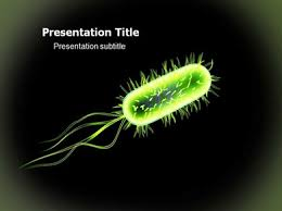 free templates for powerpoint bacteria bacteria powerpoint ppt templates ppt template for bacteria