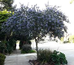 plants native to southern california california garden examples