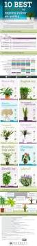 top 10 house plants for clean indoor air plants gardens and