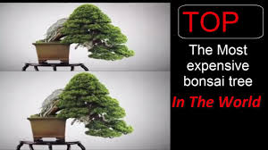the most expensive bonsai tree in the world