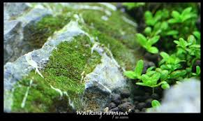 Aquascape Layout Aquatic Eden Aquascaping Aquarium Blog