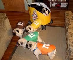 Halloween Costume Ideas Dogs 25 Pug Costume Ideas Pug Halloween Costumes