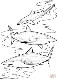 three tiger sharks coloring page free printable coloring pages
