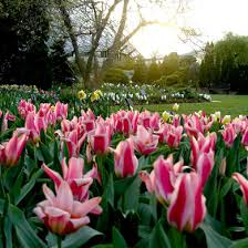 St Louis Botanical Garden Events St Louis Tulip Trot Http Www Missouribotanicalgarden Org Things