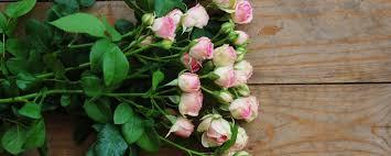 Blumen Baden Baden Www Rosen Roesch De