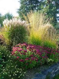 herbst finale grasses garden ideas and gardens