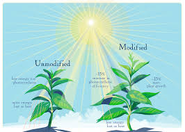 Plants That Don T Need Natural Light by Scientists Tweak Photosynthesis And Boost Crop Yield Proving It